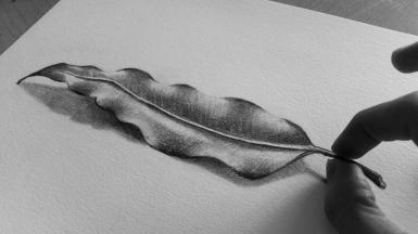 leaf-drawing