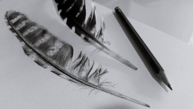 observational-drawing-feather